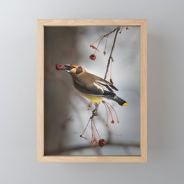 Cedar Waxwing on Branch Framed Mini Art Print