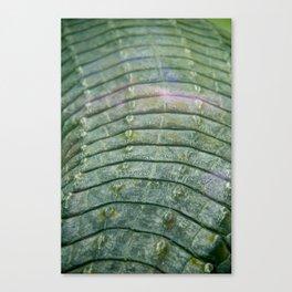 Scales of a Crocodile Canvas Print
