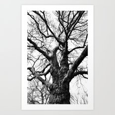 A Web of Branches Art Print