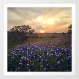 Texas Bluebonnet Sunset Art Print