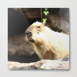 sweet capybara  Metal Print