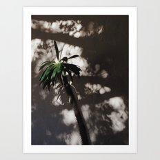 shadow palm Art Print