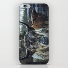 Closeup of Highland cattle cows. Norfolk, UK. iPhone Skin