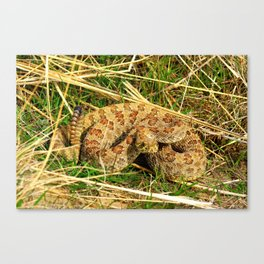 Too Close Canvas Print