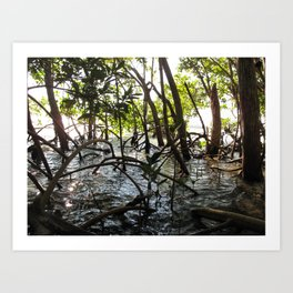 Mangroves, Florida Art Print