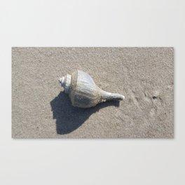 Whimsical Whelk Canvas Print
