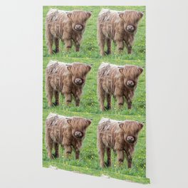 Baby highland cow Wallpaper