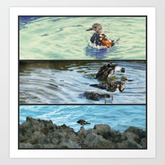 Collage ~ Birds Art Print