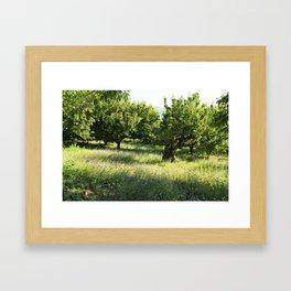 Cerezos Framed Art Print