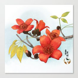 Tree Cotton Flower (Common Bombax) Canvas Print