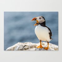 puffin Canvas Prints featuring Puffin by Moonlake Designs