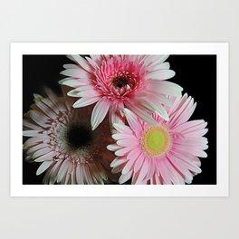 Pink Daisy Boquet Art Print