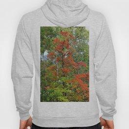 Fall Fantasies Hoody