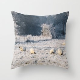 Sheep grazing a frost covered field. Norfolk, UK. Throw Pillow