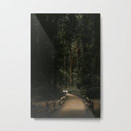Trail Through Redwood Forest Metal Print
