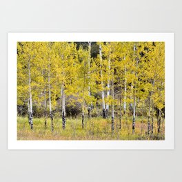 Young Elk Traumatized Aspen Grove Art Print