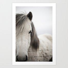 Icelandic White Art Print