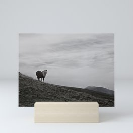 A Pony in the Pyrenees Mini Art Print