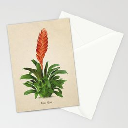 Vriesea fulgida old plate Stationery Cards