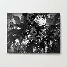 Shadow Leaves Metal Print