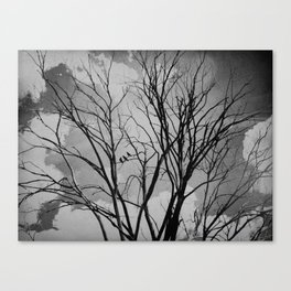 Black and White Crows Black Birds in a Tree Bokah Rustic A275 Canvas Print