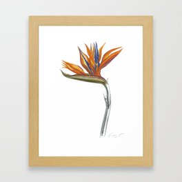 Bird of Paradise 01 Botanical Flower Framed Art Print