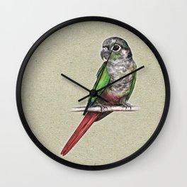 Green-cheeked conure Wall Clock