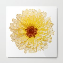 Beautiful Yellow Marigold Vector Isolated Metal Print