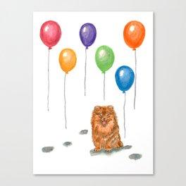 Pomeranian with balloons Canvas Print
