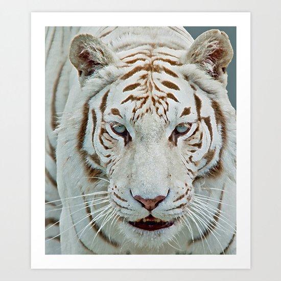 TIGER TIGER 2 Art Print