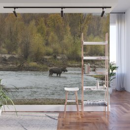 Moose Mid-Stream - Grand Tetons Wall Mural