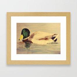 Mallard Duck Fine Art Framed Art Print