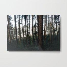 Forest XXII Metal Print