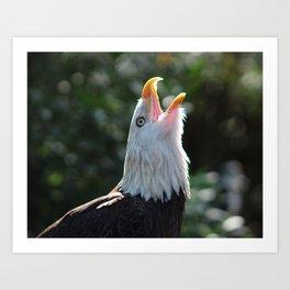 Bald Eagle Call Art Print