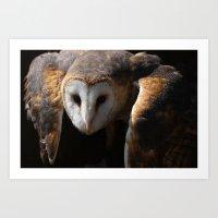 Barn Owl - Silent Hunter Art Print