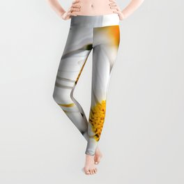 Daisy Flowers 0136 Leggings