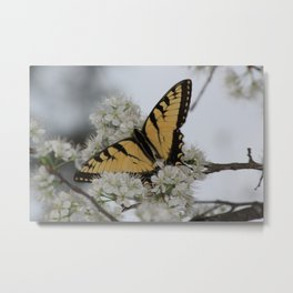 Eastern Tiger Swallowtail Butterfly Nestled Among Flowers Metal Print