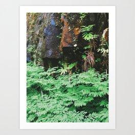 Forest Rock Art Print