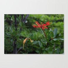 Notro flower in cucao chiloe Canvas Print
