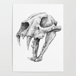 Dinictis, The 'False Sabertooth Cat' skull | Graphite Pencil Art Poster