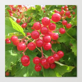 Red Summer Berries Canvas Print