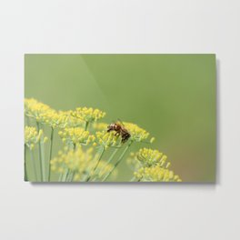 Fennel and the bee Metal Print