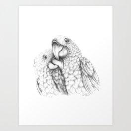 Macaw Pair In Love Art Print