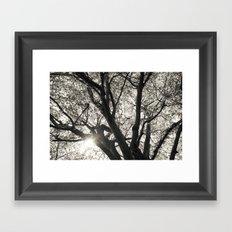 Sunlight through Hornbeam tree. Framed Art Print