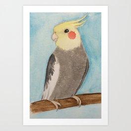 Red Cheeked Cockatiel Art Print