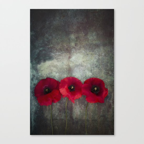 Three red poppies Canvas Print