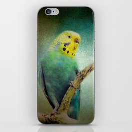 The Budgie Collection - Budgie 1 iPhone Skin