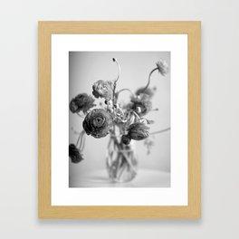 Ranunculus, black & white Framed Art Print