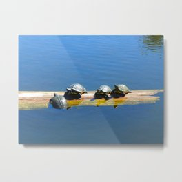 These Little Turtles  Metal Print