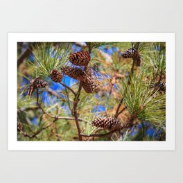 Pine Cones on a Tree Limb Art Print